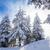 pin · arbres · couvert · neige · saison · d'hiver · arbre - photo stock © pixachi