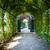 vert · naturelles · tunnel · arbres · Voyage · laisse - photo stock © pixachi