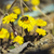 wild · bee · gele · bloemen · weide · natuur · tuin - stockfoto © pixelman