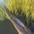 kayak bow in cattail stock photo © pixelsaway