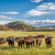 open range cattle in colorado stock photo © pixelsaway