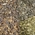 irlandês · musgo · alga · branco · chinês · colher - foto stock © pixelsaway