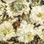 crisantemo · flor · té · alimentos - foto stock © pixelsaway