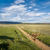 ranch road and cattle stock photo © pixelsaway