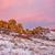 kaya · oluşumu · ağaç · park · Kaliforniya · ABD · güneşli - stok fotoğraf © pixelsaway