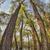 カヌー · 弓 · 赤 · 孤立した · 白 - ストックフォト © pixelsaway