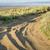 コロラド州 · 野草 · 低木 · 遅い · 夏 - ストックフォト © pixelsaway