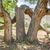 podziale · drzewo · lasu · duży · burzy · trawy - zdjęcia stock © pixelsaway