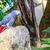 papagáj · felső · kő · kép · kint · erdő - stock fotó © pixinoo