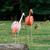 ピンク · 水 · 実例 · 鳥 · シルエット · 自由 - ストックフォト © pixinoo