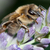 abelha · natureza · planta · flor-de-rosa · ao · ar · livre - foto stock © pixxart