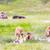 bisão · foto · natureza · américa - foto stock © pngstudio