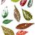 grunge leaves stock photo © pokerman