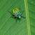 friss · zöld · banán · levél · konzerv · használt - stock fotó © prajit48