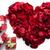 rosso · cuore · petali · isolato · bianco · bellezza - foto d'archivio © pressmaster