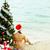 Waiting for Christmas stock photo © pressmaster