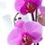 egyezség · orchideák · nagy · virágmintás · fonott · kosár - stock fotó © pressmaster