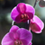 orchidées · jardin · botanique · rose · printemps · fond · art - photo stock © pressmaster