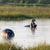 hippos in botswana stock photo © prill