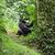 gorila · mirando · cámara · cara · naturaleza · montana - foto stock © prill