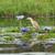 скота · белый · Постоянный · природы · области · птица - Сток-фото © prill