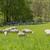 идиллический · весны · время · декораций · сельский · южный - Сток-фото © prill