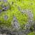 wodorost · szczegół · świeże · zielone · kamień - zdjęcia stock © prill