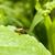 bown shield bug stock photo © prill