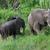 kettő · elefántok · sétál · park · Dél-Afrika · háttér - stock fotó © prill