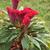 flor · belo · flor · amarela · lã · jardim · de · flores · jardim - foto stock © prill