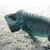retrato · iguana · lagarto · natureza · verão · dia - foto stock © prill