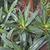 abstract · succulente · impianti · naturale · full · frame · dettaglio - foto d'archivio © prill