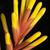 exotisch · oranje · bloesem · bloem · botanisch · tuinen - stockfoto © prill