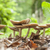 mushrooms in natural ambiance stock photo © prill