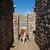 llama · funny · primer · plano · retrato · zoológico · naturaleza - foto stock © prill