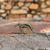 çizgili · sincap · Hint · ağaç · yaz · sevimli · havlama - stok fotoğraf © prill
