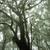 laurel · floresta · nebuloso · vulcânico · ilha · la - foto stock © prill
