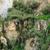 cactus · sur · EUA · México · sol - foto stock © prill