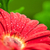 vermelho · molhado · flor · cabeça · noite · escuro - foto stock © prill