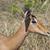 impala portrait stock photo © prill