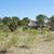 村 · デルタ · ボツワナ · アフリカ · 建物 - ストックフォト © prill