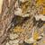 bracket fungus stock photo © prill