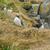 güzel · nadir · kuş · seyahat · siyah · ada - stok fotoğraf © prill