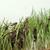 小さな · グラスホッパー · クローズアップ · 自然 · 葉 · 緑 - ストックフォト © prill