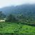 erdő · Uganda · ködös · részlet · Afrika · fa - stock fotó © prill
