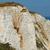 detay · uçurum · ağaç · kaya · taş · kayalar - stok fotoğraf © prill
