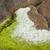海藻 · ブラウン · 詳細 · 海岸 · スコットランド · 自然 - ストックフォト © prill