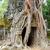 寺 · カンボジア · 風光明媚な · 遺跡 · 巨大な · ツリー - ストックフォト © prill