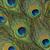 孔雀 · 羽毛 · フルフレーム · 抽象的な · カラフル · 暗い - ストックフォト © prill