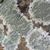 coup · toxique · champignons · herbe · bois - photo stock © prill